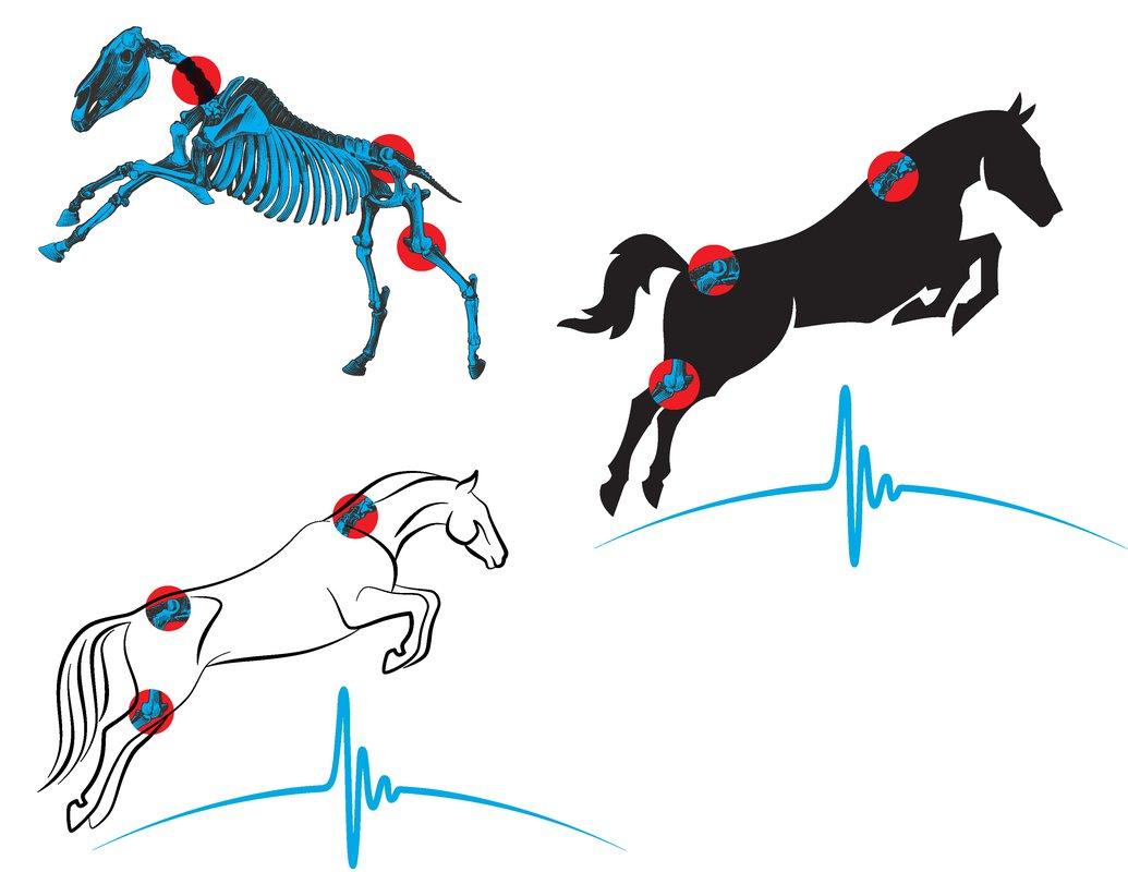 Equine Sports Medicine logo concepts