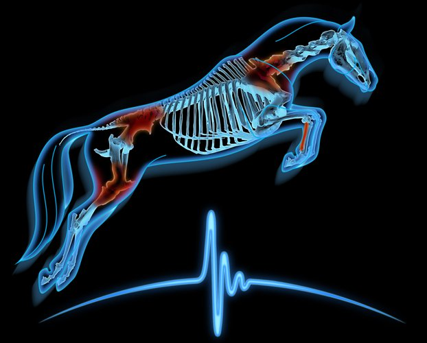 Equine Sports Medicine logo