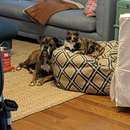 Sadie (dog) and Nora (cat)