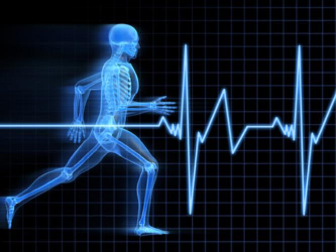 Equine Sports Medicine client logo concept