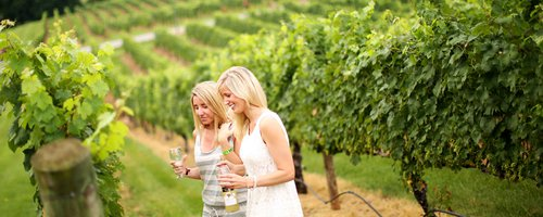 Yadkin Valley Wine Trail Continues to Make News Coverage