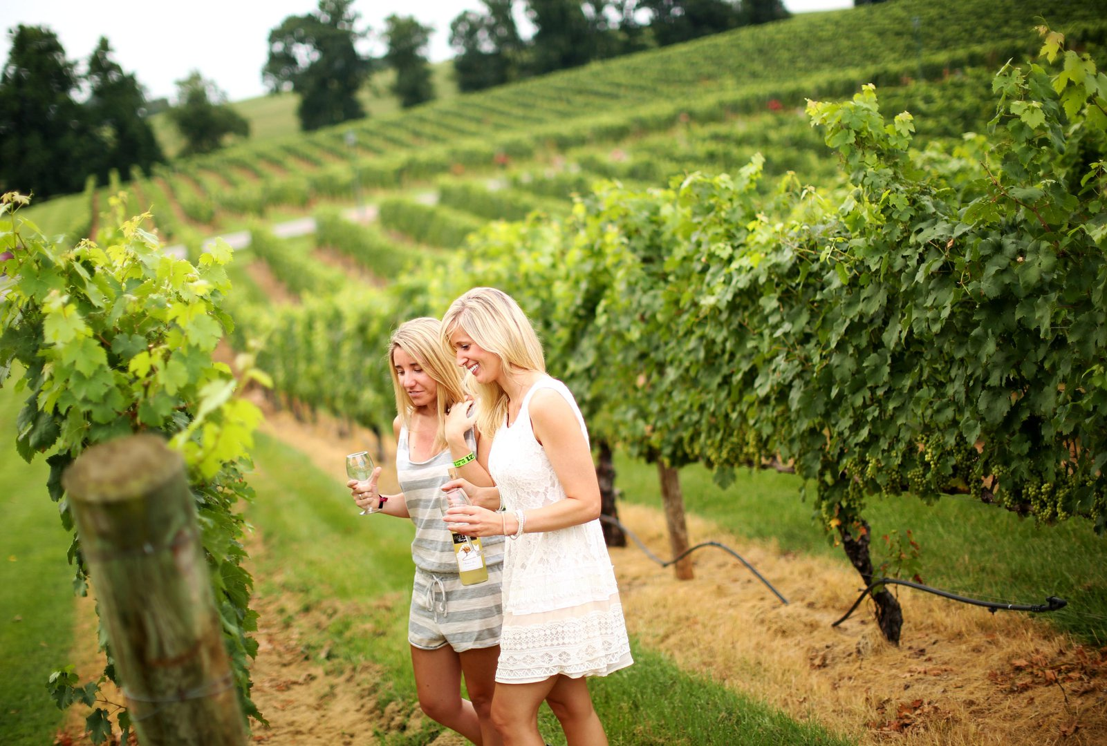 Yadkin Valley, NC's Surry County Wine Trail